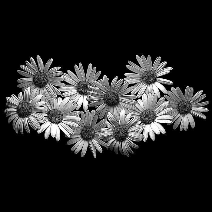 Цветы №10