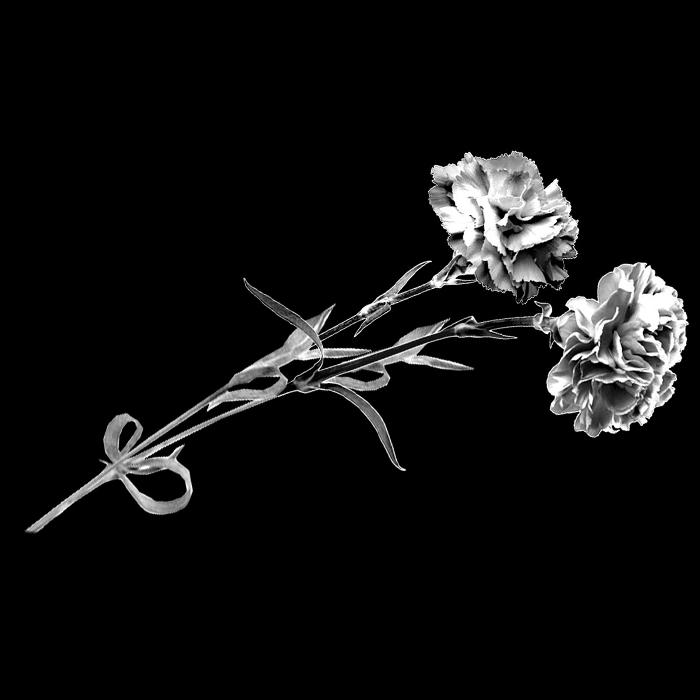 Цветы №5